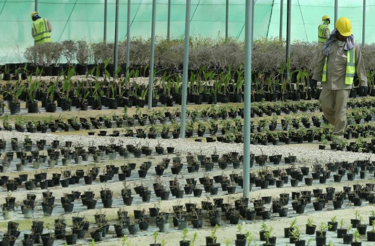 Workers at a new nursery opened outside Doha in Qatar on February 22, 2018 by the local organising committee for the country's 2022 World Cup