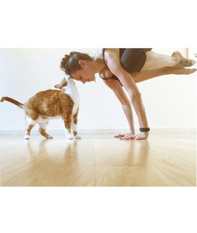 "<p>Focus on <a href=""http://www.drozthegoodlife.com/fitness/flexibility/a501/things-learned-at-cat-yoga/"" rel=""nofollow noopener"" target=""_blank"" data-ylk=""slk:finding your balance"" class=""link rapid-noclick-resp"">finding your balance</a> and living in the <em>meow</em> with your adorable feline friend.</p>"