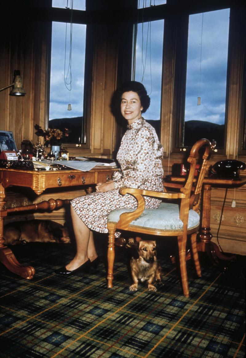 Queen Elizabeth II with her dogs in her study, 1972.