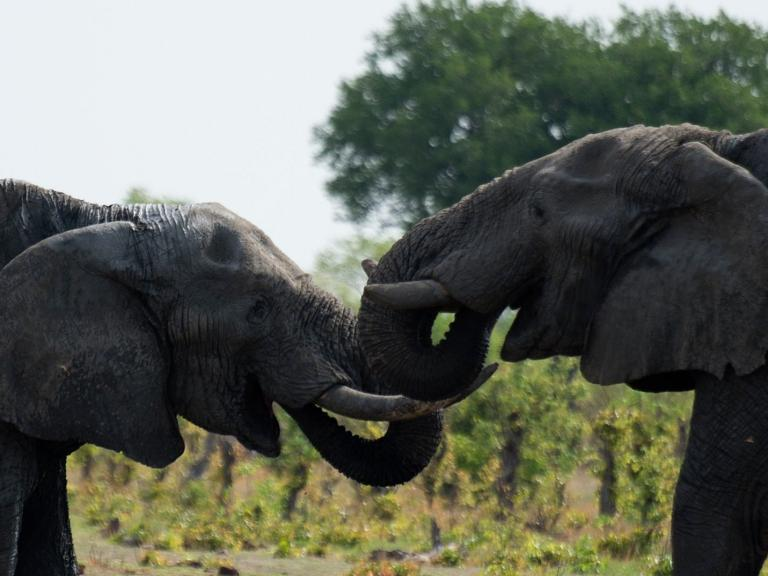 Hunter who shot dead two elephants hits back as company swamped by fury from animal lovers