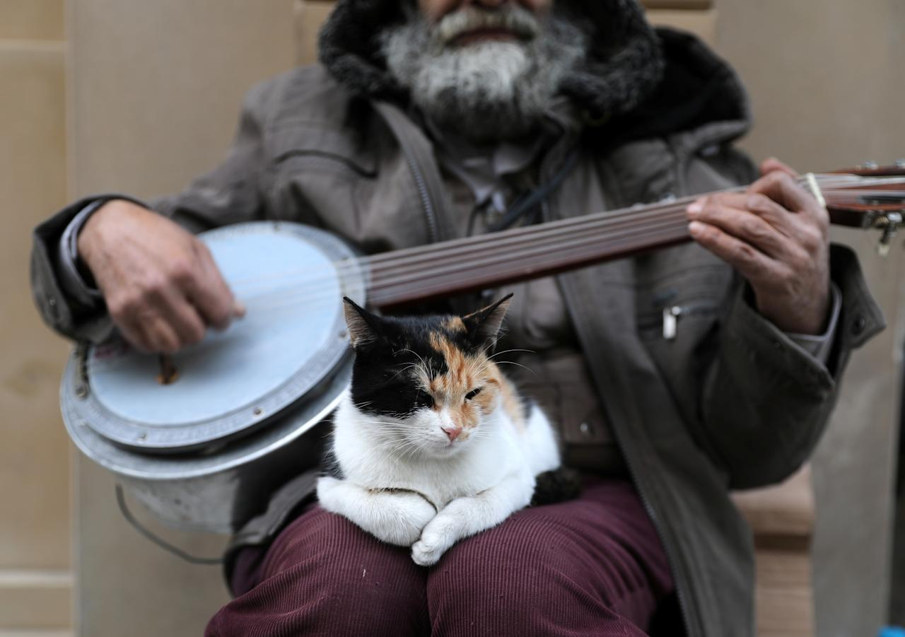 <p>A cat sits on the lap of a street singer on Jan. 2, 2018. (Photo: Goran Tomasevic/Reuters) </p>