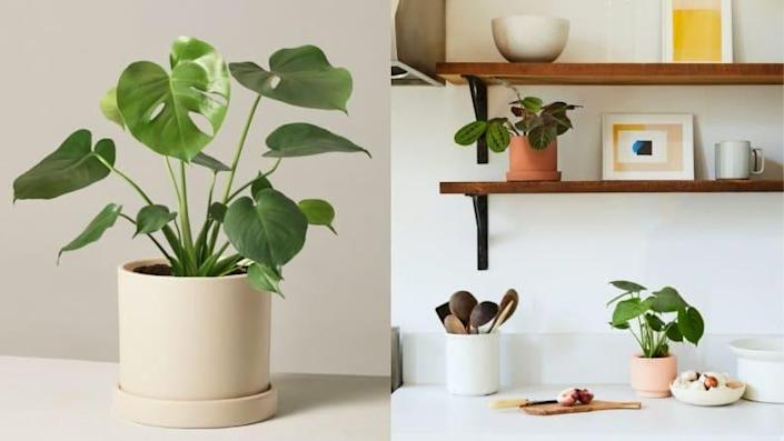 All that's missing from your sill is this of-the-moment Monstera plant.