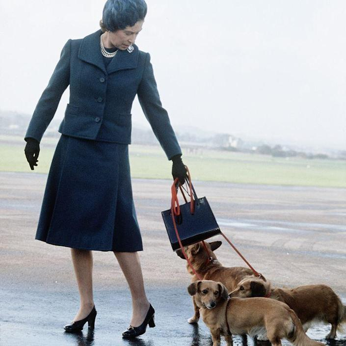"<p>Some of the Queen's corgis were known for <a href=""https://www.telegraph.co.uk/news/uknews/theroyalfamily/9485644/Queens-corgis-attack-Princess-Beatrices-terrier-Max.html"" rel=""nofollow noopener"" target=""_blank"" data-ylk=""slk:attacking other dogs"" class=""link rapid-noclick-resp"">attacking other dogs</a> and, in some instances, even <a href=""https://trove.nla.gov.au/newspaper/article/50609174?searchTerm=Queen%20corgi&searchLimits="" rel=""nofollow noopener"" target=""_blank"" data-ylk=""slk:biting people"" class=""link rapid-noclick-resp"">biting people</a>. Royal staff members had to be on their toes around the dogs, lest they get nipped.</p>"