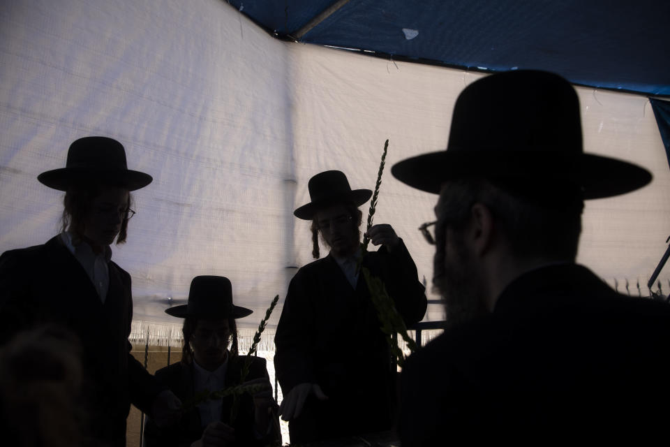 Ultra-Orthodox Jewish men check branches of the myrtle tree, or Hadas, to determine if is ritually acceptable as one of the four items used as a symbol on the Jewish holiday of Sukkot, in Jerusalem, Sunday, Sept. 19, 2021. (AP Photo/Sebastian Scheiner)