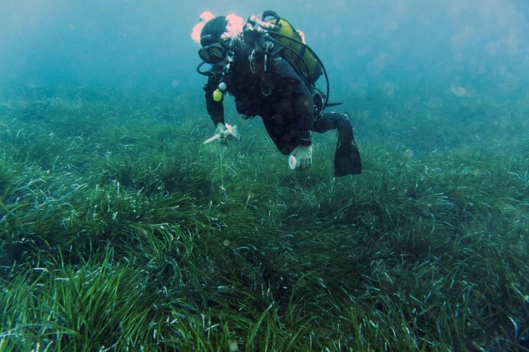 In 2020 France made it illegal for larger boats to drop anchor within protected Neptune grass zones (AFP/Boris HORVAT)