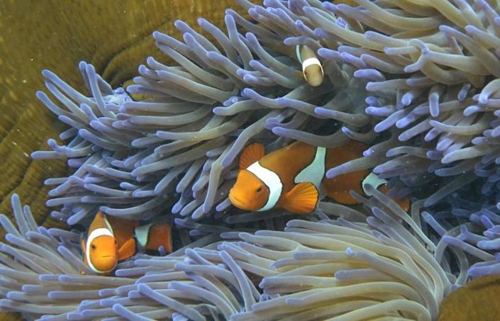 Using experimental technology and introducing heat-tolerant corals could help slow the Great Barrier Reef's decline by up to 20 years, a new study suggests