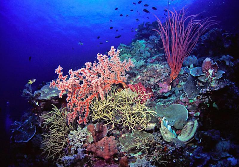 This undated handout photo provided by Marinelifephotography.com shows a reef slope densely covered by soft corals in Southeast Sulawesi, Indonesia. A new study on the timing of climate change calculates the probable dates for when cities and ecosystems across the world would regularly experience never-before-seen hotter environments based on about 150 years of record-keeping. These are the dates when every year is hotter than old hottest annual record. This means the old blistering heat of people's memories will eventually seem unusually cool in comparison to the warming years to come. Coral reef species are the first to be stuck in a new climate that they haven't experienced before and are most vulnerable to climate change, Mora said. Coral reefs will be in that new regime around 2030. (AP Photo/Keoki Stender, Marinelifephotography.com)
