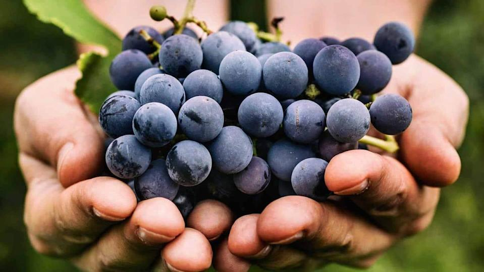 #HealthBytes: Impressive health benefits of grapes you should know about