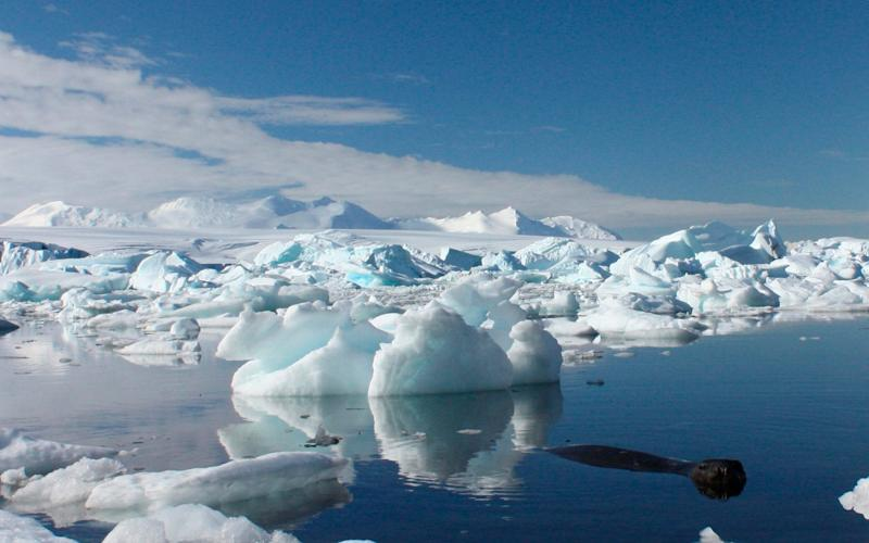 The discovery was made by British Antarctic Survey (BAS) researchers  - Reuters