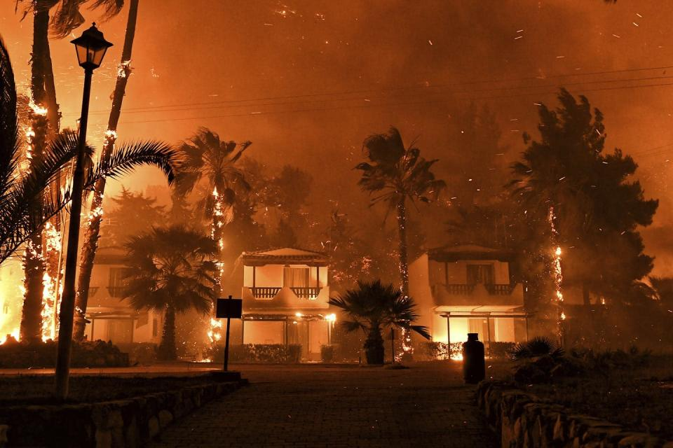 homes on fire surrounded by palm trees.