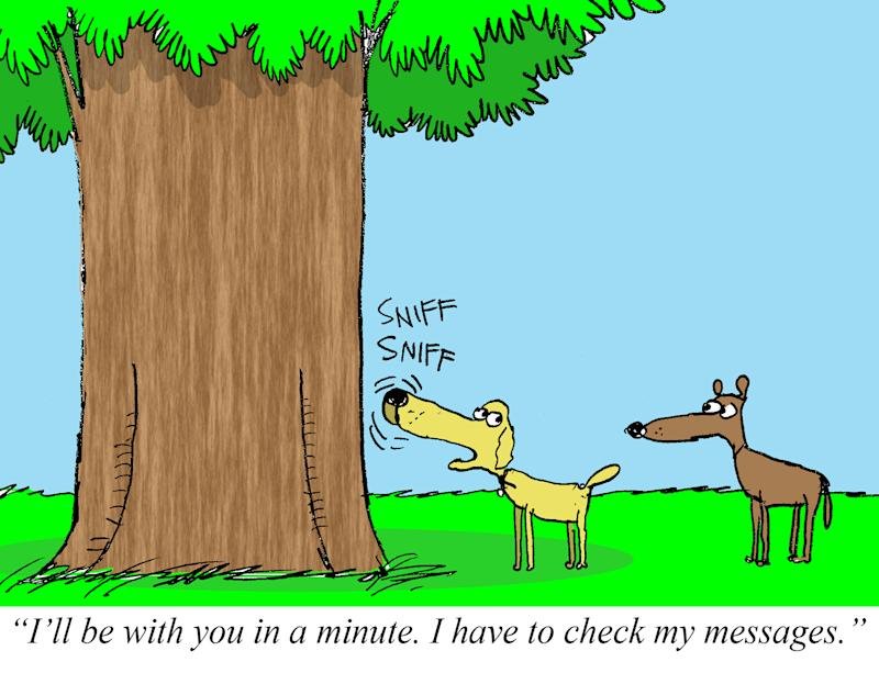 Dear Dog, Leave a Message at the Tree