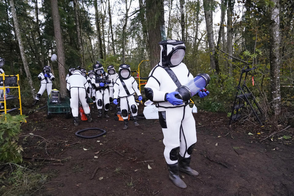 Sven Spichiger, Washington State Department of Agriculture managing entomologist, walks with a canister of Asian giant hornets vacuumed from a nest in a tree behind him Saturday, Oct. 24, 2020, in Blaine, Wash. Scientists in Washington state discovered the first nest earlier in the week of so-called murder hornets in the United States and worked to wipe it out Saturday morning to protect native honeybees. Workers with the state Agriculture Department spent weeks searching, trapping and using dental floss to tie tracking devices to Asian giant hornets, which can deliver painful stings to people and spit venom but are the biggest threat to honeybees that farmers depend on to pollinate crops. (AP Photo/Elaine Thompson)