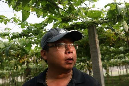 Jhang Hong-si is pictured at his bitter gourd farm in Yunlin