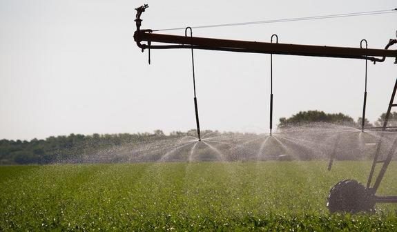 An irrigation system sprays water on a cornfield.