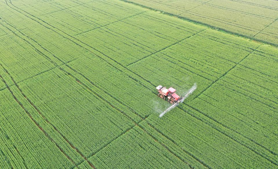 SUSONG, CHINA - APRIL 17: A field sprayer sprays pesticide in a wheat field on April 17, 2021 in Susong County, Anhui Province of China. (Photo by Li Long/VCG via Getty Images)