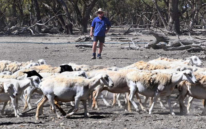 Australia's scorching start to 2019 saw the mean temperature across the country exceed 30 degrees Celsius for the first time - AAP