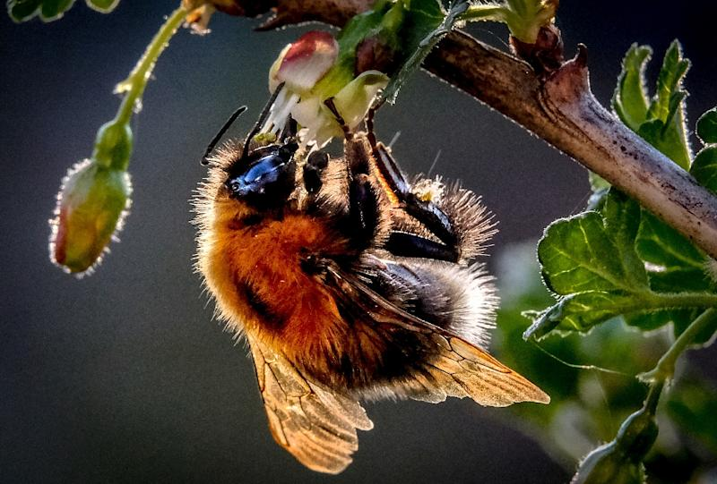 The United Nations has warned that 40 percent of the planet's insect pollinators, particularly bees and butterflies, risk global extinction, which would have serious implications for food production and ecosystem health