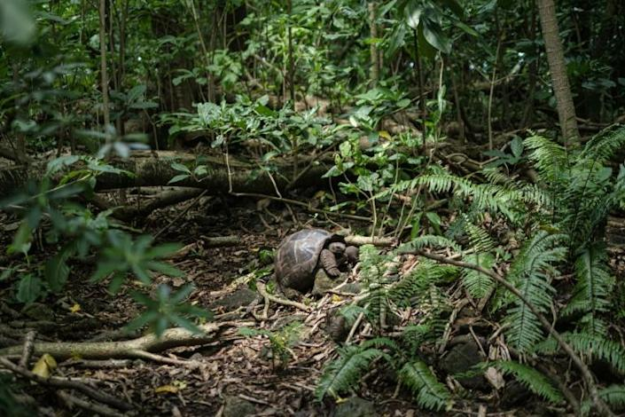 Nearly half of the Seychelles 455 square kilometres (176 square miles) are classed as protected areas (AFP Photo/Yasuyoshi CHIBA)