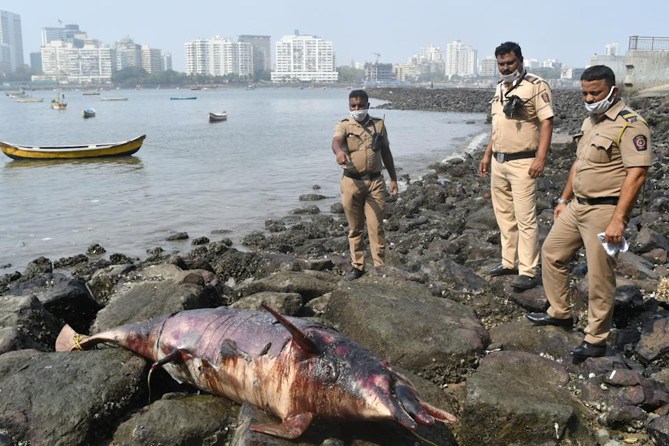 Dead dolphin washes up in Mumbai. (Photo courtesy: Arun Patil)