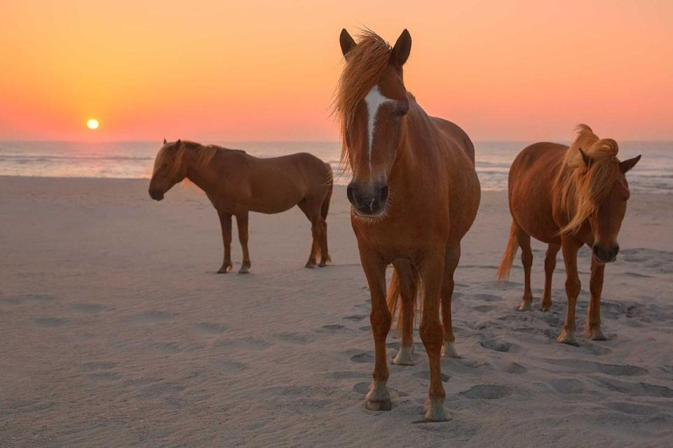 """<p><strong>Assateague Island</strong></p><p>While it's a beautiful beach, <a href=""""https://www.nps.gov/asis/index.htm"""" rel=""""nofollow noopener"""" target=""""_blank"""" data-ylk=""""slk:Assateague Island"""" class=""""link rapid-noclick-resp"""">Assateague Island</a> is known for the wild horses that roam the beaches. Local folklore describes the horses as survivors of a shipwreck off the Virginia coast. Make sure to keep your distance and respect the horses to feel at home on the island.</p>"""