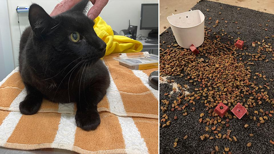 Pictured on the left is the black cat which was rescued from the bin and on the right is the cat food and rat poison.