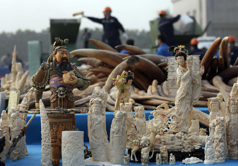 Workers, background, destroy confiscated ivory in Dongguan, southern Guangdong province, China, Monday, Jan. 6, 2014. China destroyed about 6 tons of illegal ivory from its stockpile on Monday, in an unprecedented move wildlife groups say shows growing concern about the black market trade by authorities in the world's biggest market for elephant tusks. (AP Photo/Vincent Yu)