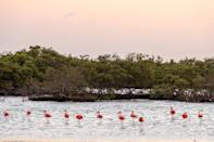 One of Bonaire's most striking features is Pekelmeer Flamingo Sanctuary, located on the island's southern salt flats and home to over ten thousand flamingos. While the sanctuary itself is off limits to travelers, you can still enjoy birding from nearby Pink Beach which offers a view of the similarly pink birds. While the flamingos may be a draw, the island is home to more than 22 beaches, marine cave formations, and more that make it a paradise for nature enthusiasts and beachgoers alike.