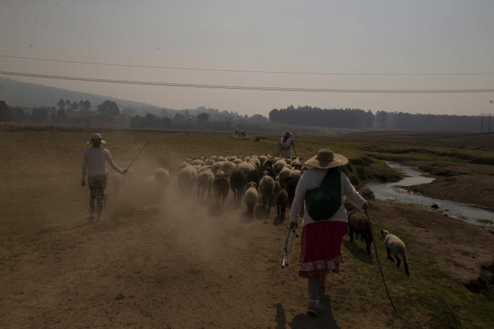 Shepherds walk with their flock along the banks of the Villa Victoria Dam, the main water supply for Mexico City residents, on the outskirts of Toluca, Mexico, Thursday, April 22, 2021. Drought conditions now cover 85% of Mexico, and in areas around Mexico City and Michoacán, the problem has gotten so bad that lakes and reservoirs are drying up. (AP Photo/Fernando Llano)