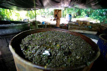 Crushed coca leaves mixed with chemicals soak in a barrel at a small farm in Guayabero, Guaviare province, Colombia, May 23, 2016. REUTERS/John Vizcaino