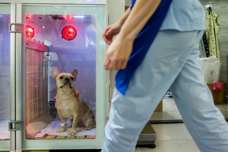 The salon offers oxygen therapy, which it says calms the animals