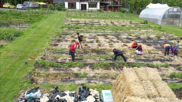 PHOTO: People work on the land at Soul Fire Farm in Petersburg, New York.  (ABC News )