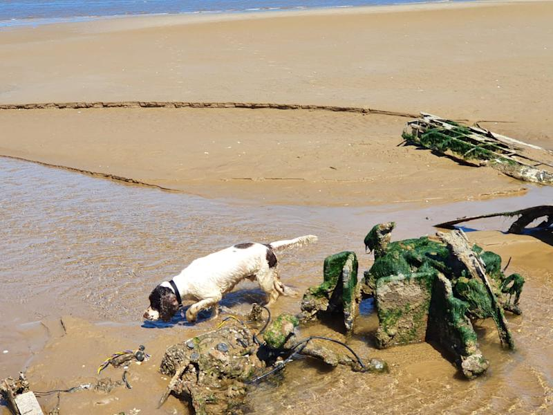 """The wreckage of the WWII RAF Bristol Beaufighter which has been discovered on a Cleethorpes beach in in North East Lincolnshire. See SWNS story SWLEplane. A pair of dog walkers stumbled across the wreckage of a rare WWII RAF fighter plane hidden on a beach where it had been buried under the sand for 76 YEARS. Debi Hartley, 51, was on a casual walk with her partner Graham Holden, 54, and their dog Bonnie when they made the """"one in a million"""" discovery. The carcass of the airplane revealed itself on an undisclosed patch on Cleethorpes beach, with its wings protruding through the shifting sands. The RAF confirmed that the wreckage is one of their Bristol Beaufighter, believed to be aircraft serial number JM333 of 254 Squadron RAF."""