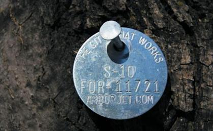 The mystery behind the metal dog tags on Chicago trees