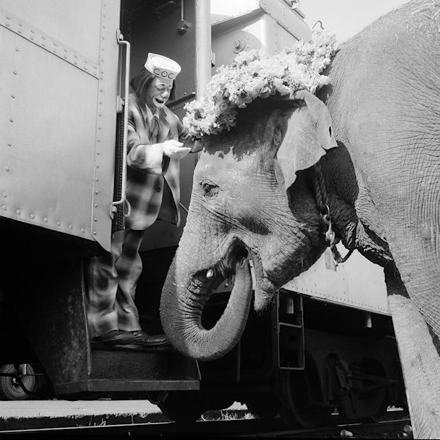 <p>Coco the Clown places a floral Easter bonnet on Targa's head in preparation for a freight yard preview and parade in New York on April 5, 1966 as the circus unloaded in the Bronx yards of the New Haven railroad. Targa, 14-year-old elephant, was said to be the largest of the animals unloaded from trains for the march downtown to Madison Square Garden for opening night show later in the day. (AP Photo) </p>