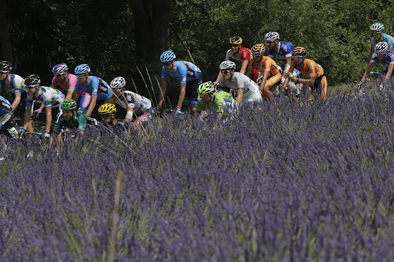 The pack passes lavender fields during the fifteenth stage of the Tour de France cycling race over 242.5 kilometers (150.7 miles) with start in in Givors and finish on the summit of Mont Ventoux pass, France, Sunday July 14, 2013. The riders will climb to an altitude of 1912 meters (6,273 Feet) as they tackle Mont Ventoux pass at the end of the longest stage of this Tour de France. (AP Photo/Christophe Ena)