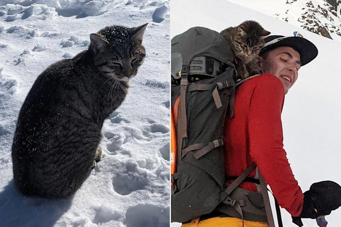 Cat Follows Hikers to 10,000 Foot Summit
