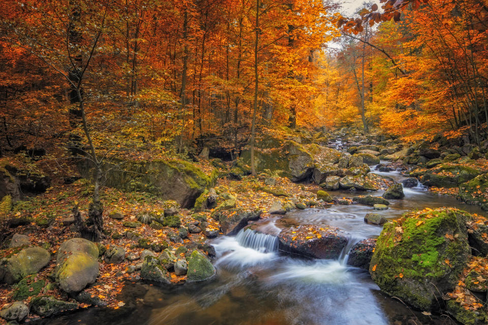 The stunning scenery at the national park at Harz Mountains. [Photo: Getty]