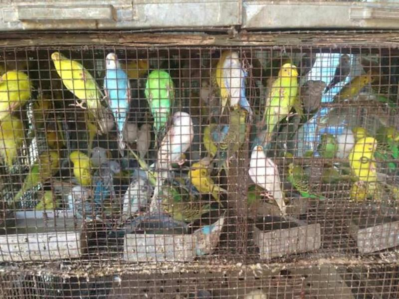 Birds packed into cages in pet shops. Image: Ambika Hiranandani