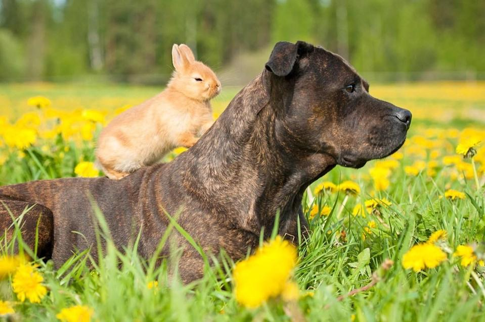 """That bunny hopped right on and said, """"Tag, you're it!"""""""
