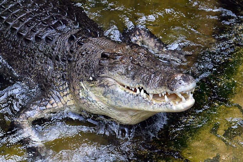 Attack: A teenager was attacked by a crocodile in Queensland: AFP/Getty Images