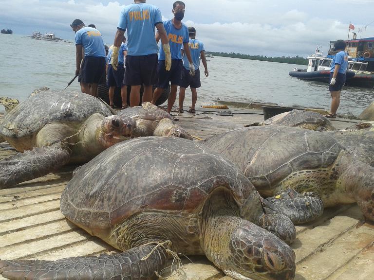 Philippine maritime police unload some of the sea turtles from a Chinese-flagged vessel seized by officials off the disputed Half Moon Shoal, west of Palawan, on May 11, 2014