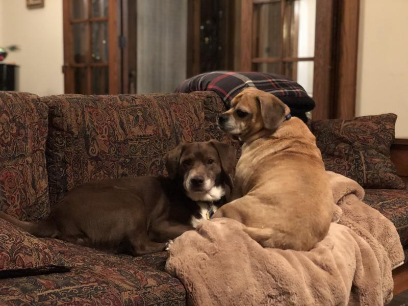 He also shares his home with Truman, a beagle-lab mix. (Pete Buttigieg)