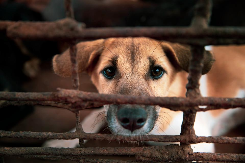 Daisy the puppy looks through the bars of a rusted cage