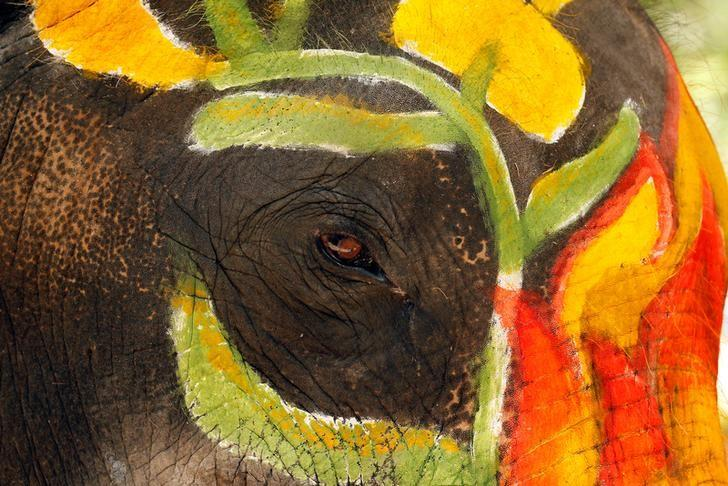 <p>An elephant is painted in celebration of the Songkran water festival in Ayutthaya province, north of Bangkok, Thailand April 11, 2017. REUTERS/Chaiwat Subprasom </p>