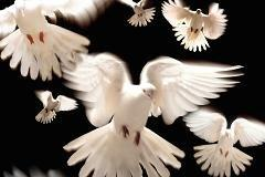 Who let the doves out? Stocks soar on taper news