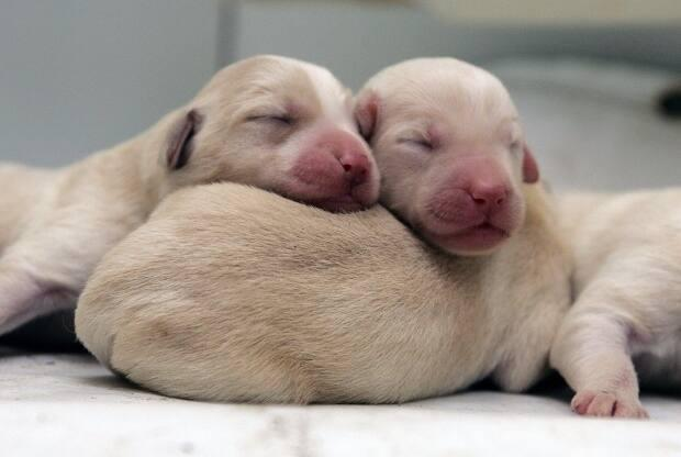 Year of the dog: Pandemic puppies in high demand, short supply