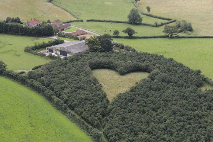A heart-shaped meadow, created by a farmer as a tribute to his late wife, can be seen from the air near Wickwar, South Gloucestershire. The point of the heart points towards Wotton Hill, where his wife was born. (SWNS.com)