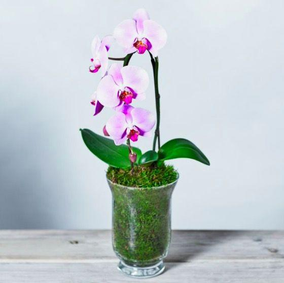 Photo credit: Waitrose Florist