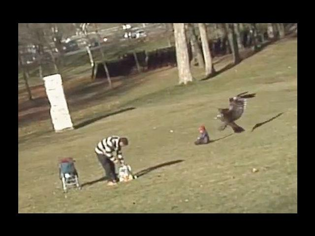 """<b>The Other Flying Baby:</b><br> The eagle has landed and it carried off a little baby who was just minding his own business. The """"Eagle Snatching Baby"""" video, was the internet's final viral baby gift in 2012. The fact that it was all a hoax, created by Canadian animation school students, didn't make it any less click-worthy."""