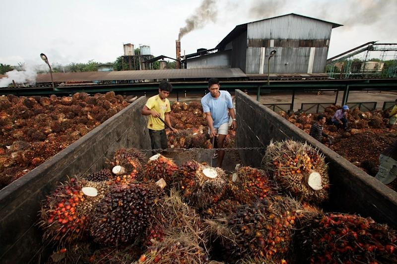 India Resume Purchases of Malaysian Palm Oil, Four Months After Diplomatic Row